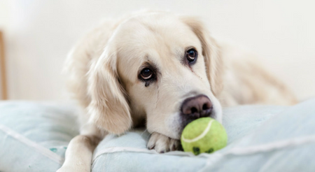 8 Helpful Clues in Dog Arthritis