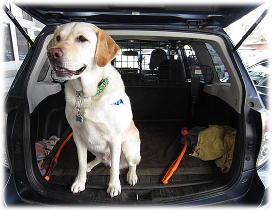 Dog Arthritis Symptoms - Difficulty jumping into the car